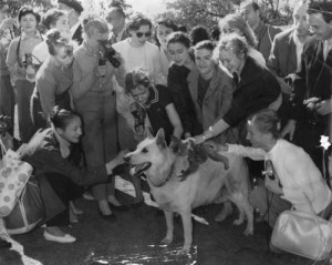 Members of a Russian ballet troupe visit Lone Pine Sanctuary, Brisbane, 1961