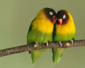 The real love birds
